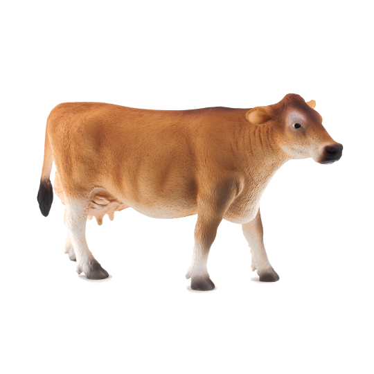 Krowa rasy Jersey ANIMAL PLANET