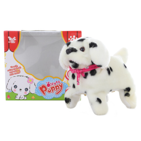 Pies dalmatyński spaceruje i robi salta