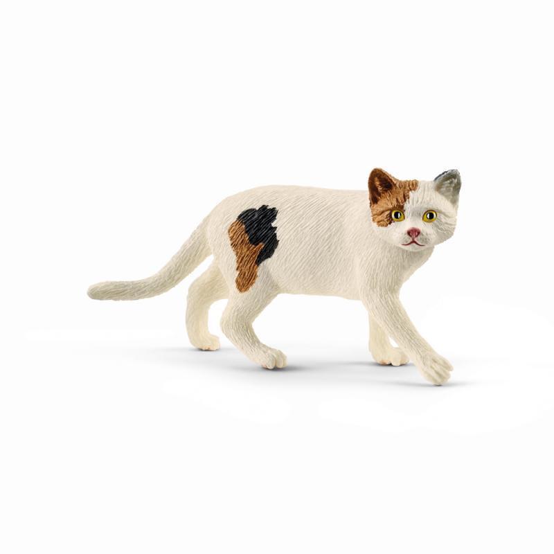 Zvieratko - mačka americká krátkosrstá