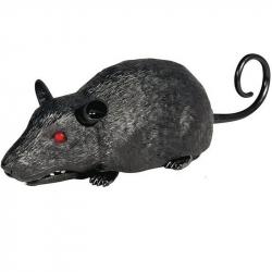 Szczur do opanowania