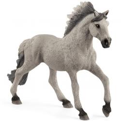 Zwierzę - ogier Sorraia Mustang