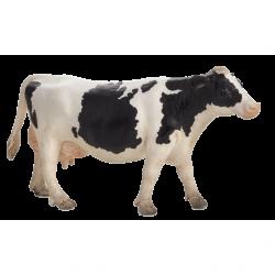 Krowa rasy holsztyńskiej ANIMAL PLANET