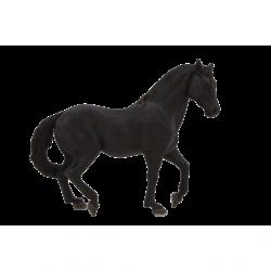 Animal Planet Andaluský černý kůň