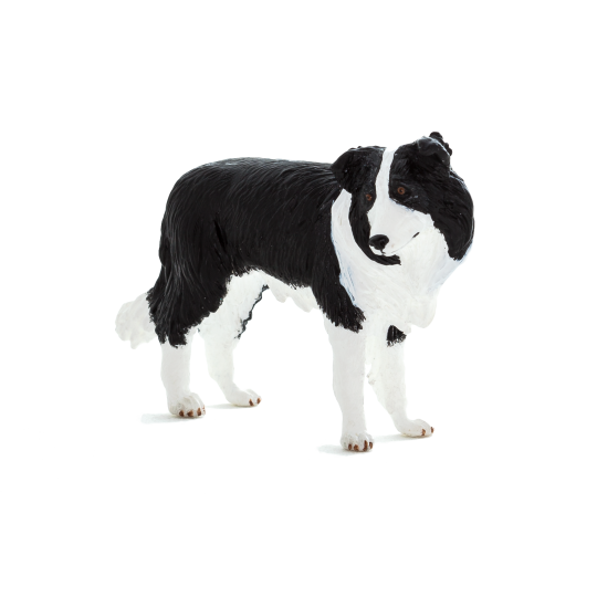 Pies rasy Border Collie ANIMAL PLANET