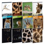 Ars Una Zošit Wildlife A4 súprava 6 ks