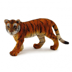 Tiger mláďa stojace