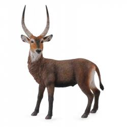 Antilopa vodní