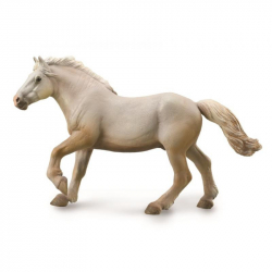 Kůň american