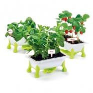 Mój Mały Ogród - truskawki, mięta bazylia
