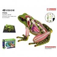 4D Model - Žába