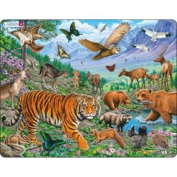 Puzzle Amurská tiger v sibírskom lete 36 dielikov