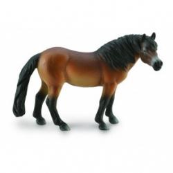 Exmoor Pony hřebec