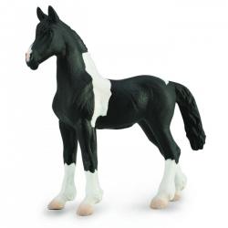 Barock Pinto Foal