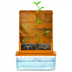 Rastliny v bludisku