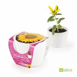 Mini zahrádka - Mini květináč Ceramic se slunečnicí