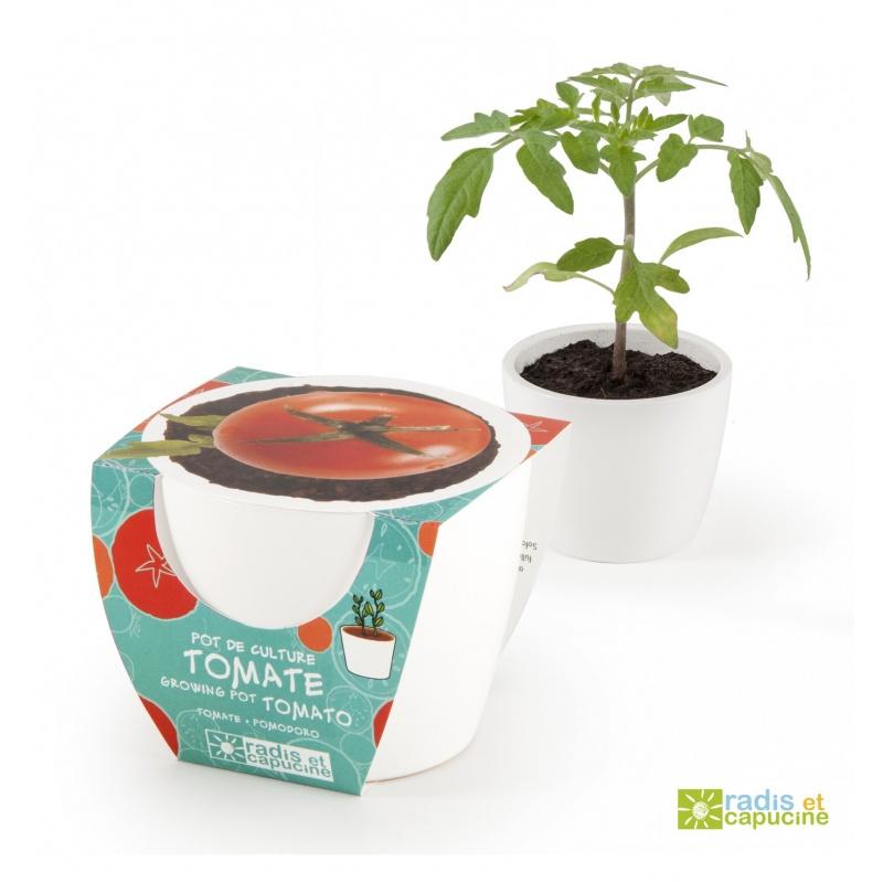 Mini zahrádka - Mini květináč Ceramic s cherry rajčátky
