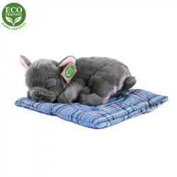 plyšový pes Francouzský buldoček ležící, 23 cm