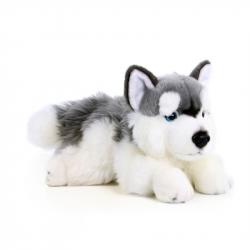 Plyšový pes husky ležiace, 30 cm