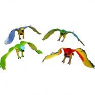 papagáje 4 druhy