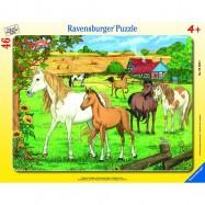 Koně 30-48d