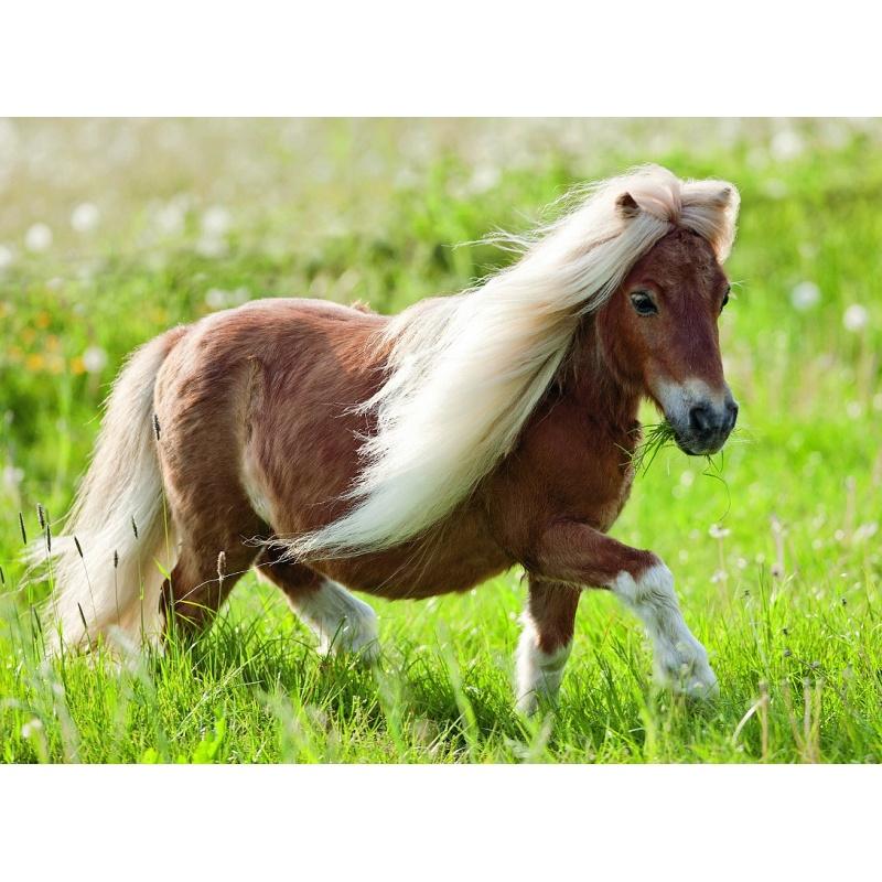 Malý pony 100d XXL