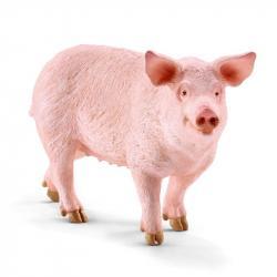 Zwierzę - świnia