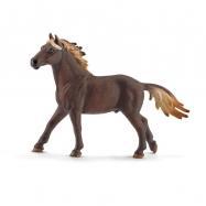 Hřebec Mustang