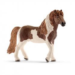 Zvieratko - islandský Pony žrebec
