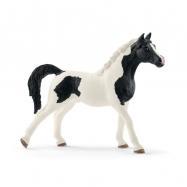Zvieratko - žrebec Pintabianský