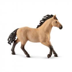 Zvieratko - kôň plemena Quarter Hengst