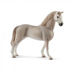 Rasa Holsztyńska - Koń Wałach