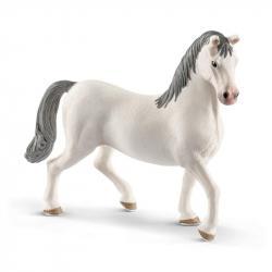 Rasa Lipicańska - Koń Ogier