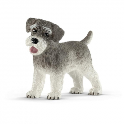Sznaucer Miniaturowy - Pies