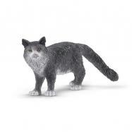 Zvířátko - Mainská mývalí kočka