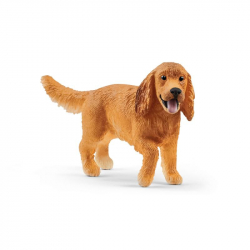 Pet - dog Cocker Spaniel Angielski