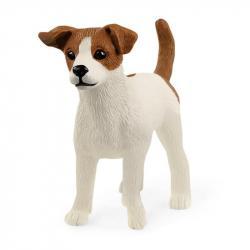 Zwierzę - Jack Russell Terrier