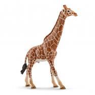 Zvířátko - samec žirafy