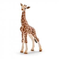Zvieratko - mláďa žirafy