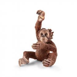 Zvířátko orangutan mládě