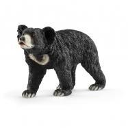 Medvěd pyskatý