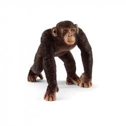Šimpanzí mládě
