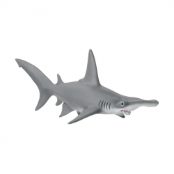 Zvieratko - Žralok kladivohlavý