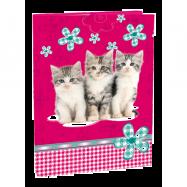 Box A5 Cats