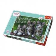 Puzzle Koťata 260 dílků 60 x 40 cm