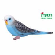 papagáj Andulka