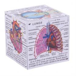 Didaktická kocka - Ľudské telo